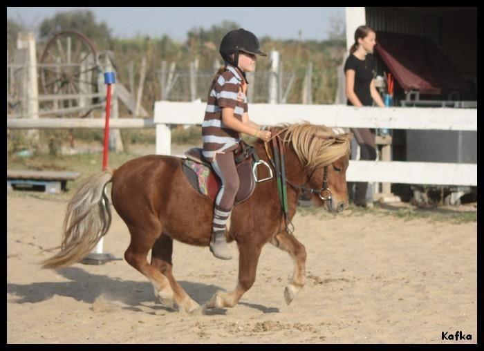 Initiation ludique au poney 2/8 ans